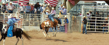 pro-rodeo-event-in-arena