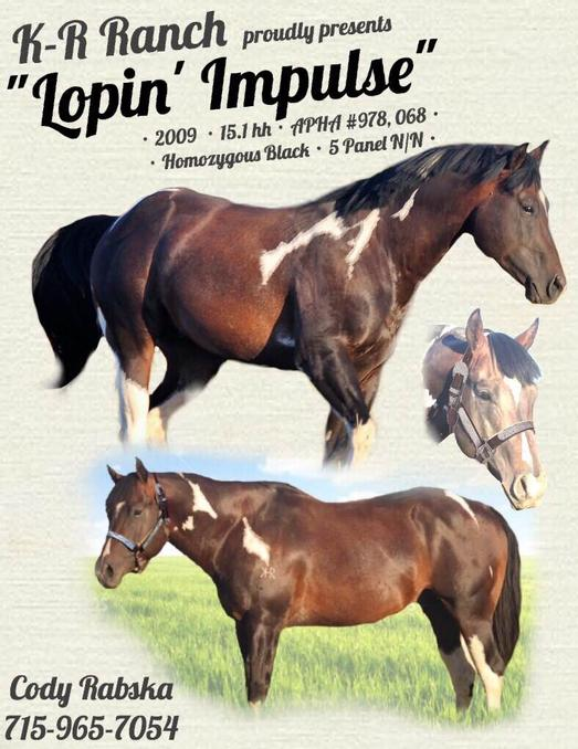 stallion-loper-impulse-shown-on-poster