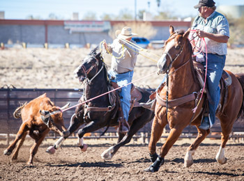 header-and-healer-roping-calf-in-8-seconds-in-rodeo-arena