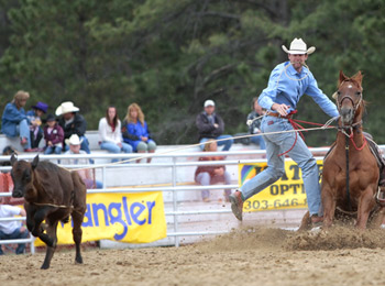 cowboy-roped-calf-hopping-off-his-horse