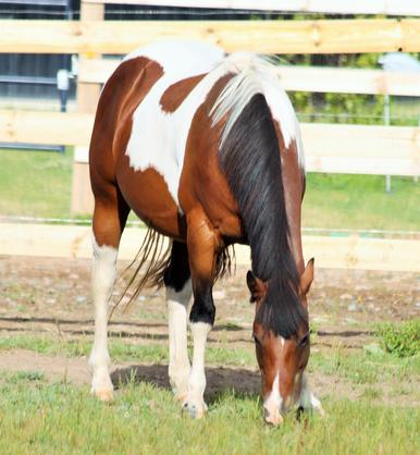 APHA Broodmares | K BAR R Ranch & Arena