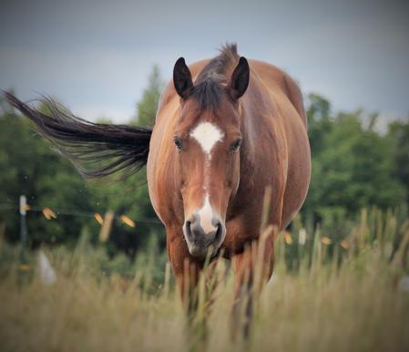 mare-walking-at-us-swinging-her-tail
